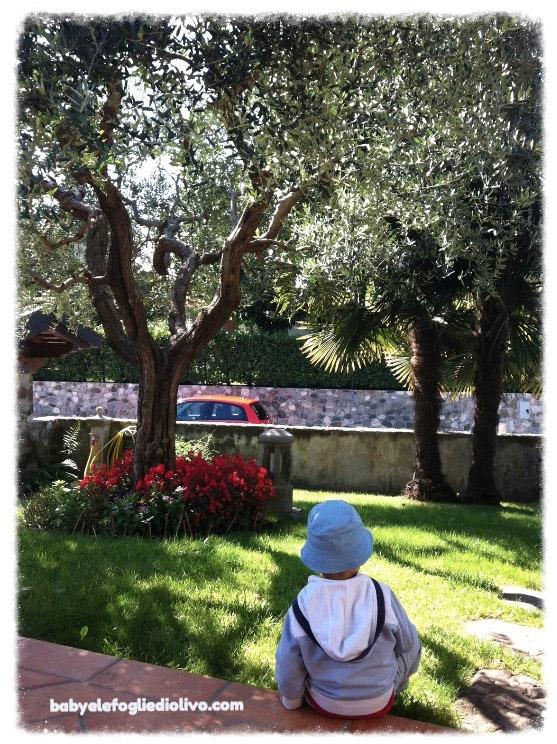bimbo e olivo